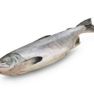 Лосось (вес 1,5 - 3,5кг)
