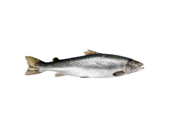 Семга норвежская 2-3 кг